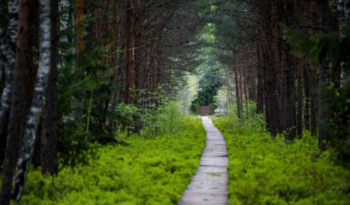 Caminatas por los desconocidos rincones de los países bálticos