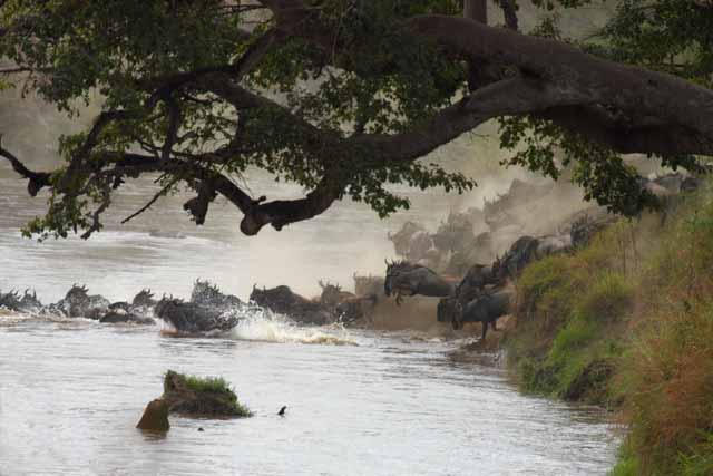 Safari en Tanzania | Autor Unai García