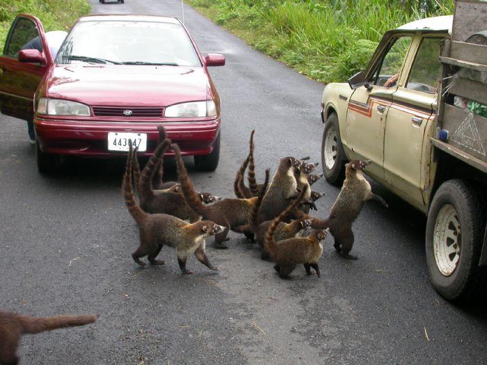 Costa Rica - Pura Vida! - Autor Patricia Perez
